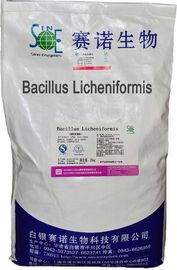 Китай Животное питание Probiotics напудрило бациллу Licheniformis 100billion CFU/G SEM-BL100BI дистрибьютор